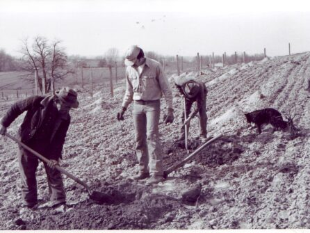A black and white image of three men in work clothes and gloves in a field. Two of the men bend over hand tools as they work the earth, and the man in the center looks down at the dirt.