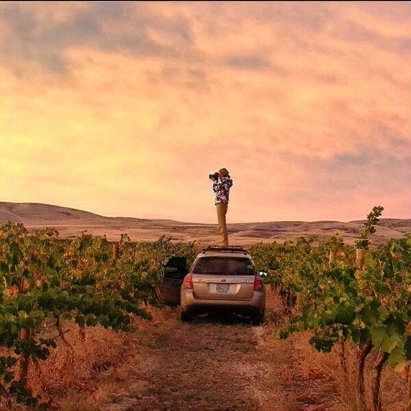 A person stands on the roof of hatch-back style car parked in a vineyard, camera to their eye. The sky shows muted sunset pinks and oranges, and there are rolling brown hills in the distance.