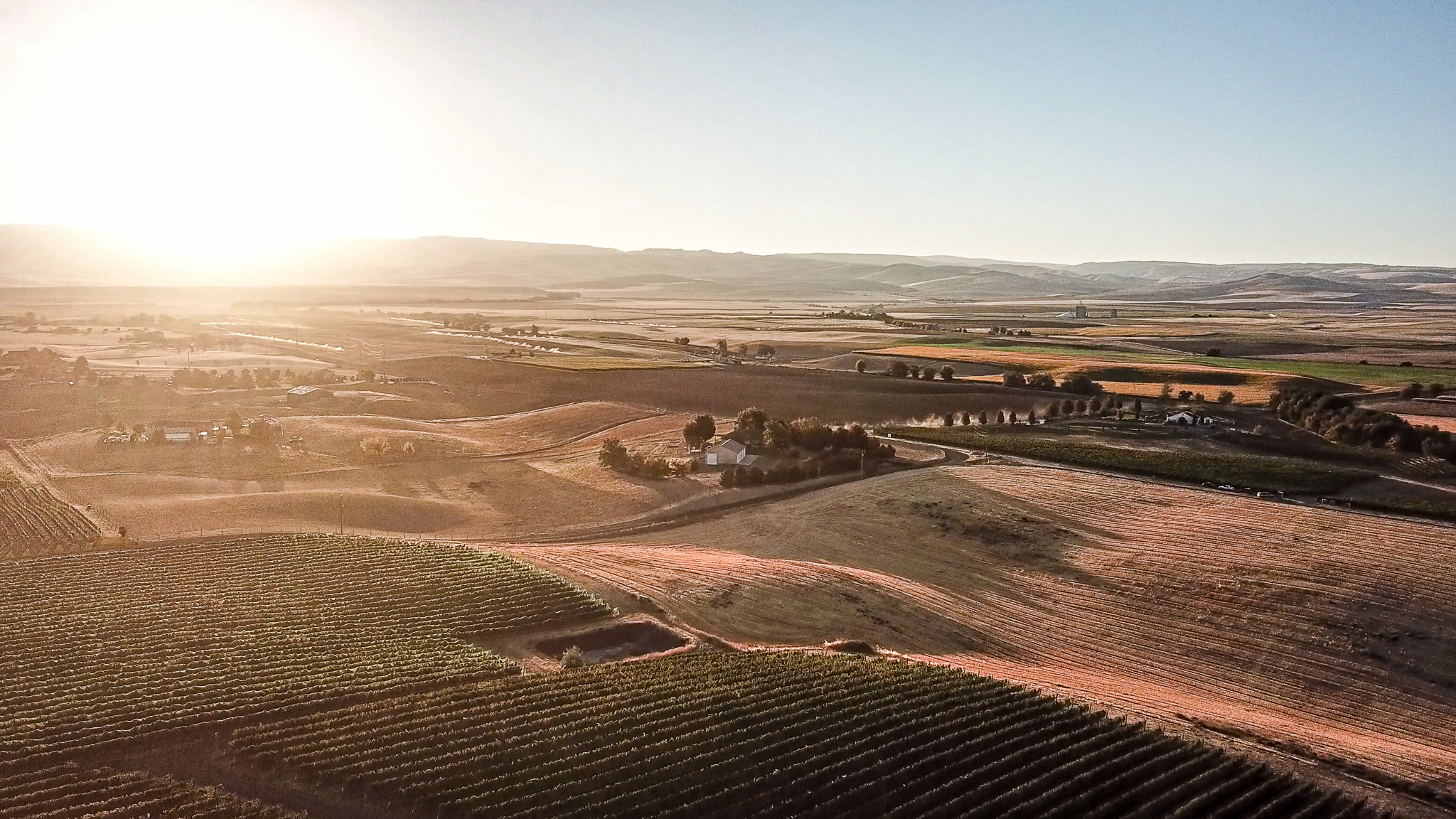 Aerial view of blocks of vineyards and other crops with tan sections between. The sun is in the left upper corner and the sky is muted blue.