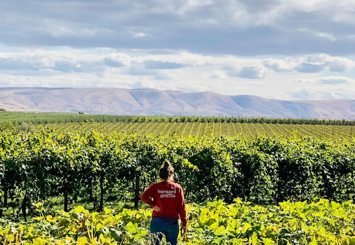 """Woman wearing a red sweatshirt with the words """"by Barnard Griffin"""" stands in a garden of squash plants, looking out toward rows of grape vines. The sky is blue with lots of white and grey clouds."""