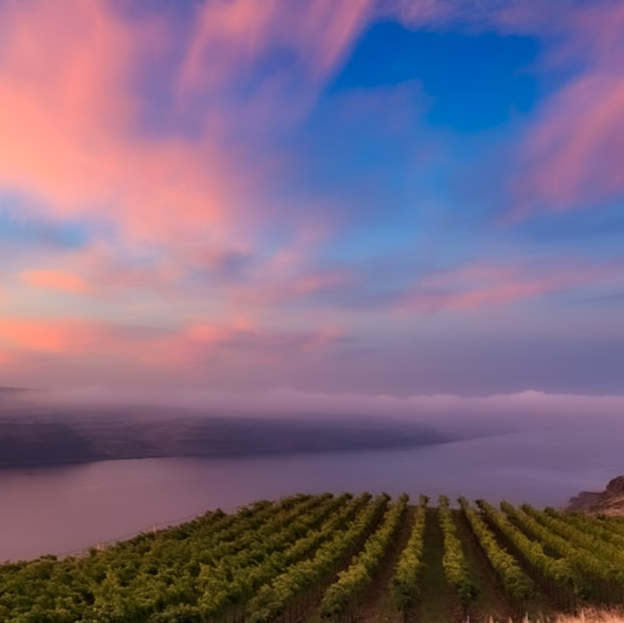 Green rows of grape vines on a cliff that drops off toward the broad river below. The sky is tinted purple, peach, and blue from the sunset, and a low bank of clouds hugs the river.