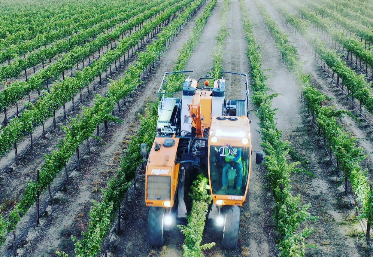 An orange tractor moves down a row of green vines