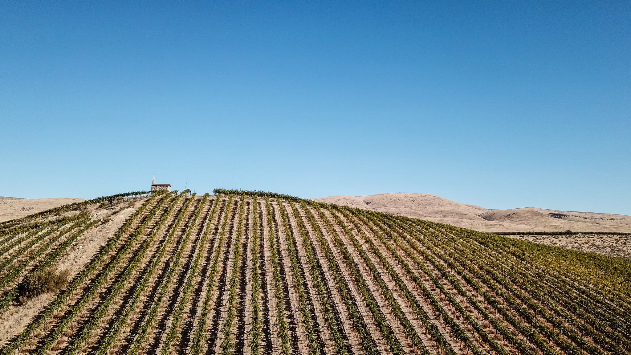 Neat rows of grape vines lead up a hill, with a small stone chapel at the top. There are tan, rolling hills in the background and a bright blue sky above.