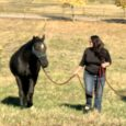 A woman with long dark hair in a black shirt walks in a field leading a black horse by a rope