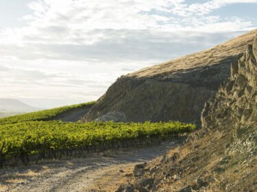 A steep hillside with green vines under it and cottony grey clouds above.