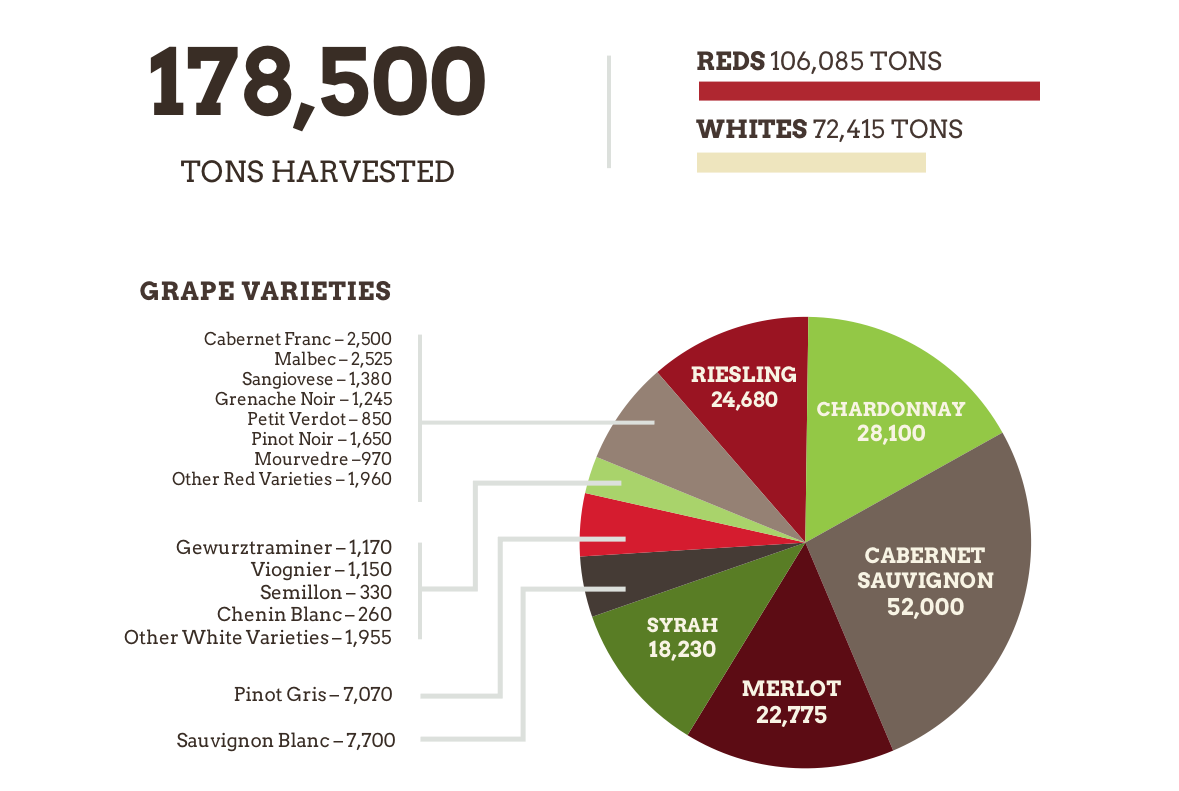 Infographic of the amount and grape variety breakdown of the 2020 harvest.