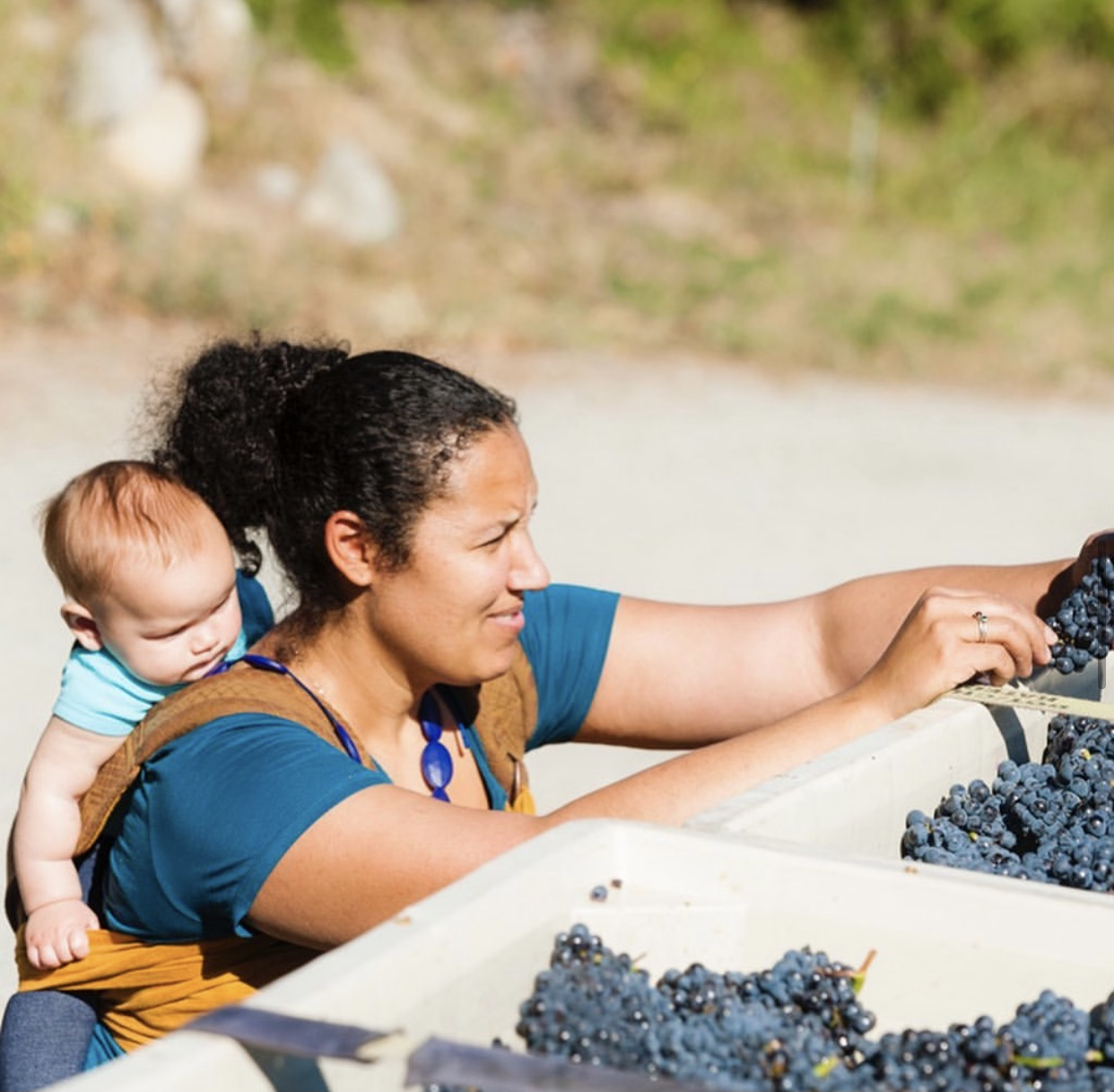 A woman with an infant strapped to her back holds and inspects a dark purple grape cluster. Bins of grapes are in front of her.