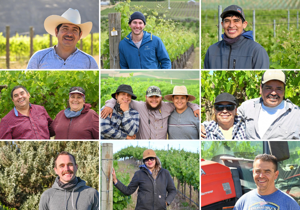 A collage of 9 images of people smiling in vineyards.