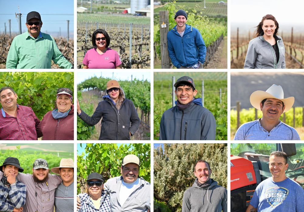A collage of 12 images of people smiling and standing in front of vineyards,
