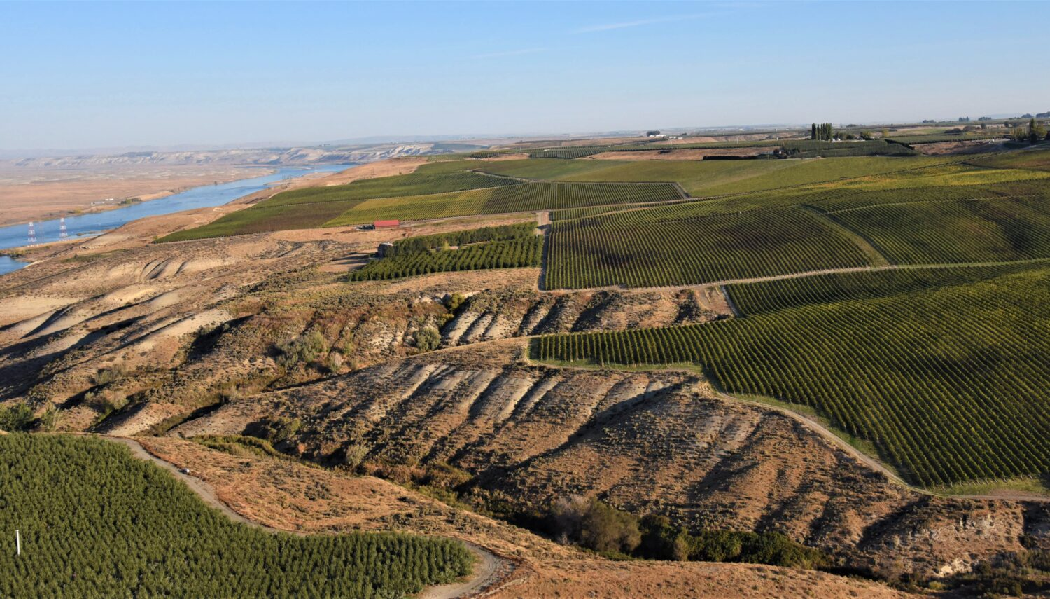 Aerial view of a tan hill sloping down to the left with gullies and rivulets. Green vineyards are above the slope, with a blue sky above.