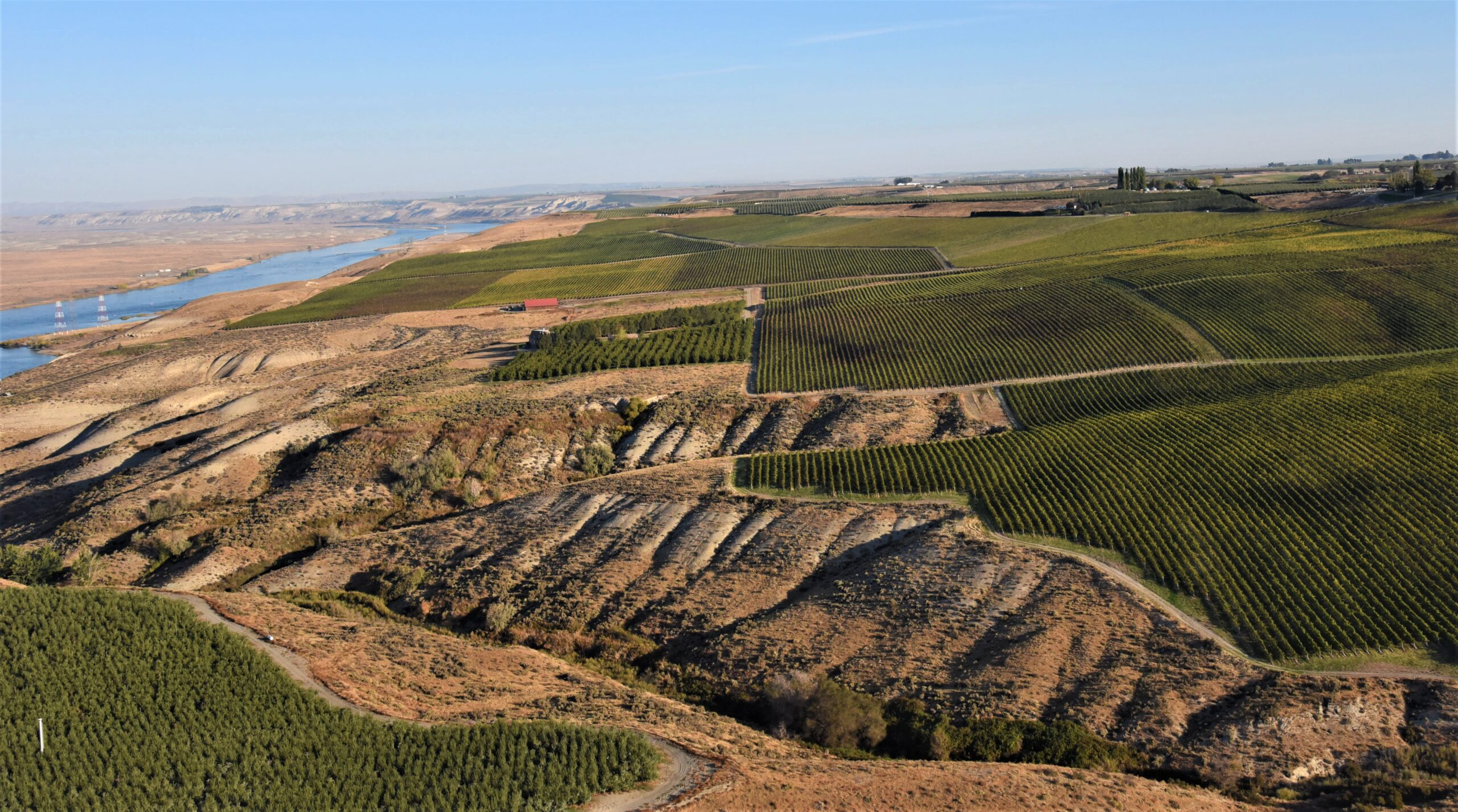 Aerial view of blocks of vineyards in neat rows, cut by a creek bed cut with dry gullies. A broad river is in the distance to the left and the sky above is hazy light blue.