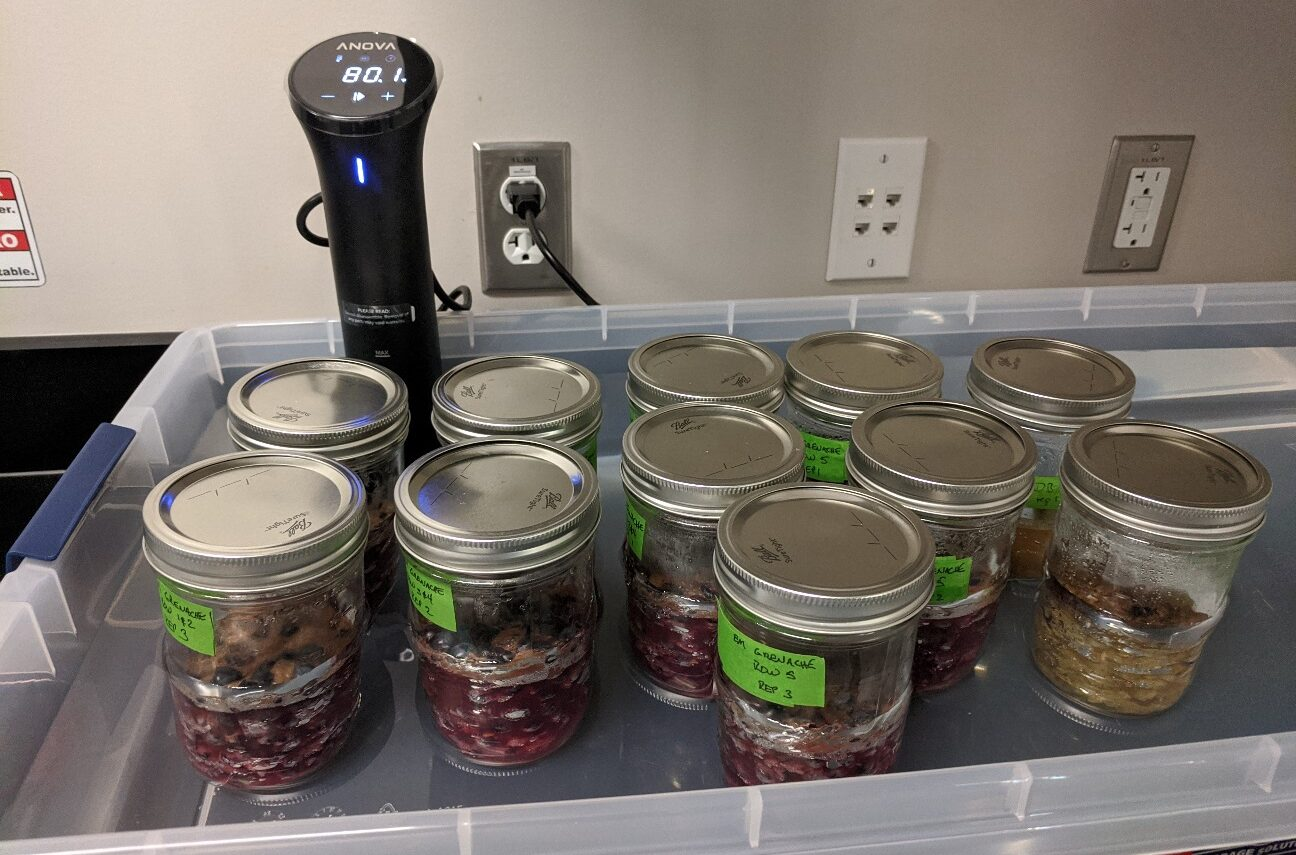 canning jars full of grapes with metal lids in a plastic shallow bin, next to a black sous-vide machine